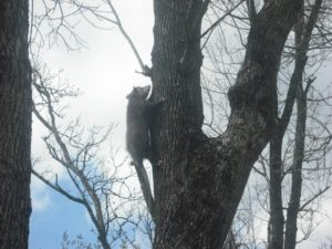Opossum released in Houston tx